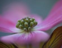 Flora….